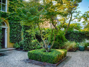 Formal box hedging and tree are the focal point of this Dublin garden design.